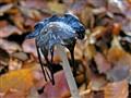 Mushroom with fly
