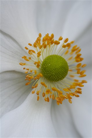 Radial Core of Flower