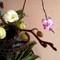 orquidea_4