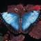 FMNH Butterfly Rainforest 01, Frame 25, Fuji Provia 100