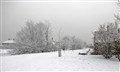 Snowy white.....