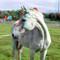 Horse in Oss 3D