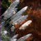 Adelaide Botanic Park Ferns-1