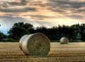 Bales In The Evening