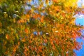 Fall Abstract 2