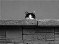 I see you see me