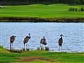 4 Cranes