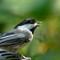 Birds2018-50sm: OLYMPUS DIGITAL CAMERA