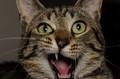 crazy-kitty