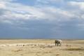 Elephants and springboks in the Etosha National Park, Namibia