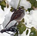 Birdie in the Snow