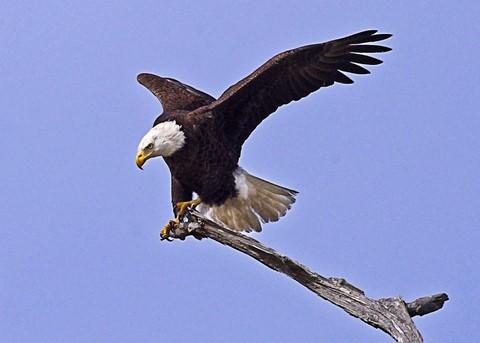 eagle mar 2012 4A