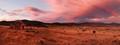 Old Currango plain sunset
