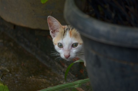 Kucing ngintip 02