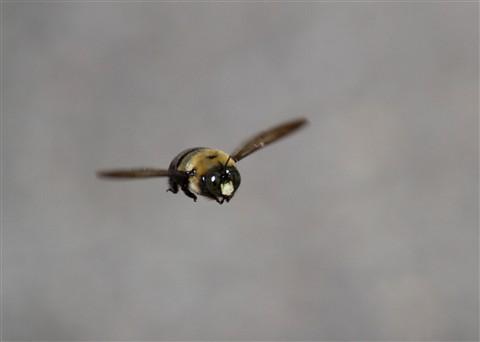 Mailbox Bee IMG_3202