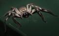 Arachnaphobia
