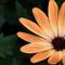 creamy orange flower