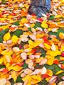 A Scattering of Leaves