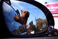Back Seat Dog