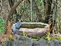 The Birdbath (man made)