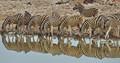 Zebras in Etosha NP