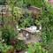My garden-1