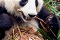 panda preserve, Chengdu