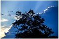 silhouette of a tree against a Silver Lining Cloud