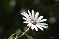 flor bien