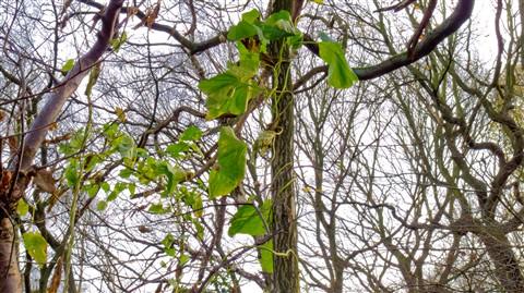 vines_trees (1 of 1)