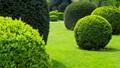 Shades of green trees