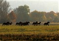 Crasy Horses