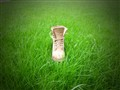 Shoe on grass