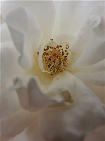 Soft white 2