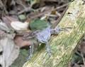 raincoat-lizard