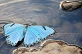 Butterfly Waves