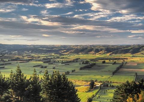 Dunedin suburb, New Zealand