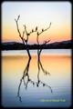 Life on Dead Tree