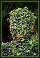 Ivy Man