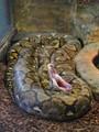 Lazy python