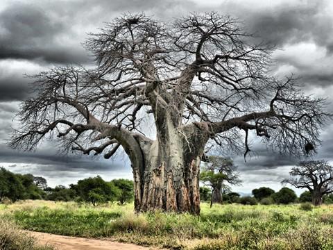 BaobabTree (FILEminimizer)