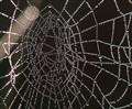 Dewy Web..........