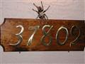 tarantula by front door