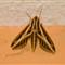 moth3534