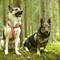 Dogy Friends