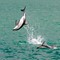 Dolphin jumps leaving a trail of sparkles