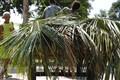 palm load