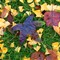 leaves_ginko2