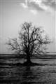 Lone Tree BW