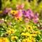 Botanical gardens Alingsas:
